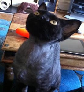 Ripley The Cat